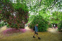 © Licensed to London News Pictures. 24/05/2020. IVER, UK.  Visitors walk by the variety of rhododendrons flowering during warm weather in the Temple Gardens of Langley Park, now open to the public again as the UK government has slightly relaxed coronavirus pandemic lockdown restrictrions.  A former royal hunting ground, Langley Park has links to King Henry VIII, Queen Elizabeth I and Queen Victoria.  Each year, the masses of flowers bloom from March to June.  Photo credit: Stephen Chung/LNP