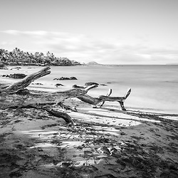 Mōkapu Beach with fallen tree driftwood black and white photo in Wailea Makena Maui Hawaii. Copyright ⓒ 2019 Paul Velgos with All Rights Reserved.