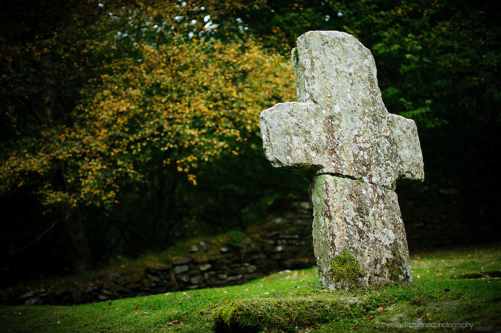 A lonely gravestone stands amid the forests trees at the site of a historic ruined church in Glendalough, Ireland