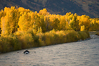 Fishermen float the Snake River amidst colorful fall foliage in Jackson Hole, Wyoming.