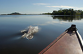 COLOMBIA ORINOCO RIVER DOLPHINS