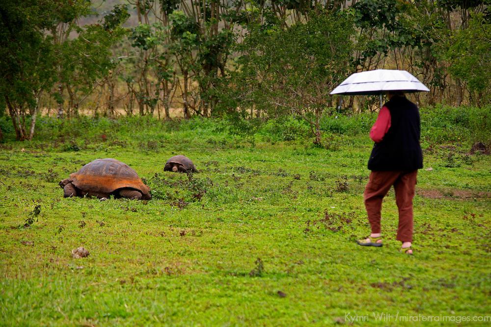South America, Ecuador, Galapagos Islands. Galapagos Tortoise encounter.