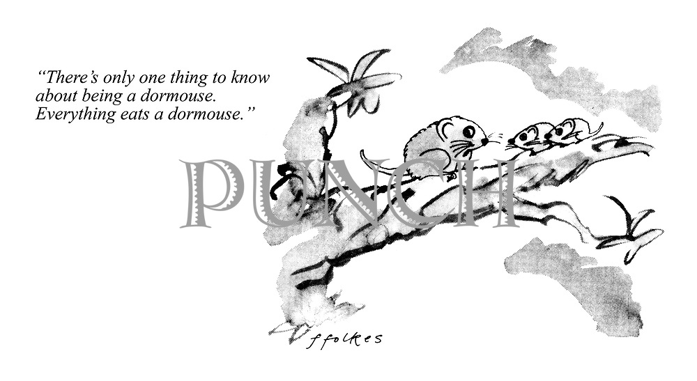 """There's only one thing to know about being a dormouse. Everything eats a dormouse."""