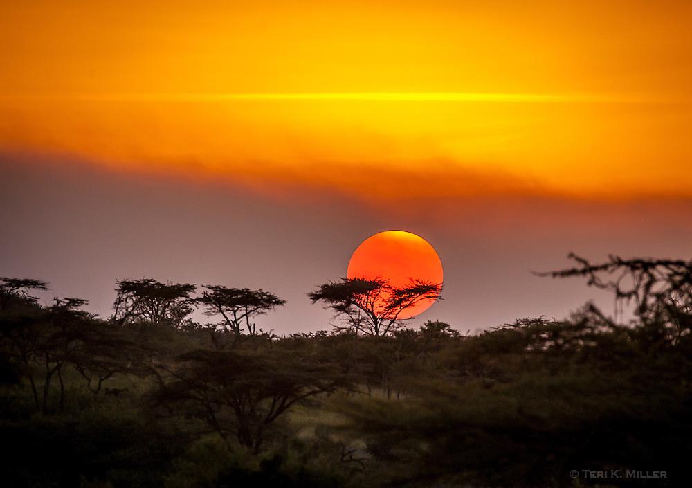 Sunset in the Masai Mara, Kenya.