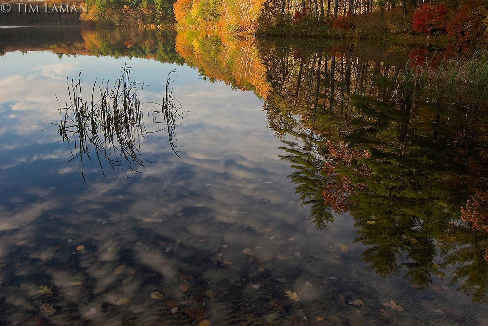 Reflections in Walden Pond in the fall.
