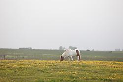 Horses late evening in Akureyri, Iceland - Hestar síðla kvölds á Akureyri