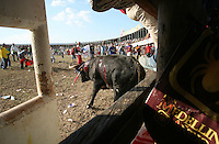 A bull runs loose in the ring during the annual Corralejas in Sincelejo, Colombia on Friday, January 18, 2008.  The corraleja, a bullfighting ritual in northern Colombia pitting hundreds of amateur matadors, many in advanced stages of inebriation, against a 900-pound bull. Regarded in other parts of Colombia as a bizarre spectacle, the corralejas are passionately defended by people of the northern savannas, an impoverished region. (Photo/Scott Dalton).