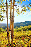 350426-1006 ~ Copyright:  George H. H. Huey ~ Aspen tree in the Park Range  at sunset [near Steamboat Springs].  Routt National Forest, Colorado.