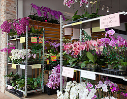 A huge variety of orchids tempt buyers at this shop in Hong Kong's Flower market.