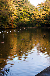 Duck pond on a sunny Autumn day in Endcliffe Park Sheffield<br />