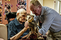 BURGUNDY, FRANCE - June 01. Unique in France, an association led by a falconer trying to help the elderly to recall some memories of youth..Thanks to these birds, the elderly suffering from Alzheimmer regain some of their childhood memories, Down's syndrome and social misfits start again to communicate.