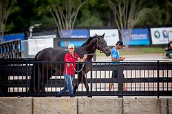 Zeibig Steffen, GER, Feel Good<br /> World Equestrian Games - Tryon 2018<br /> © Hippo Foto - Sharon Vandeput<br /> 16/09/2018