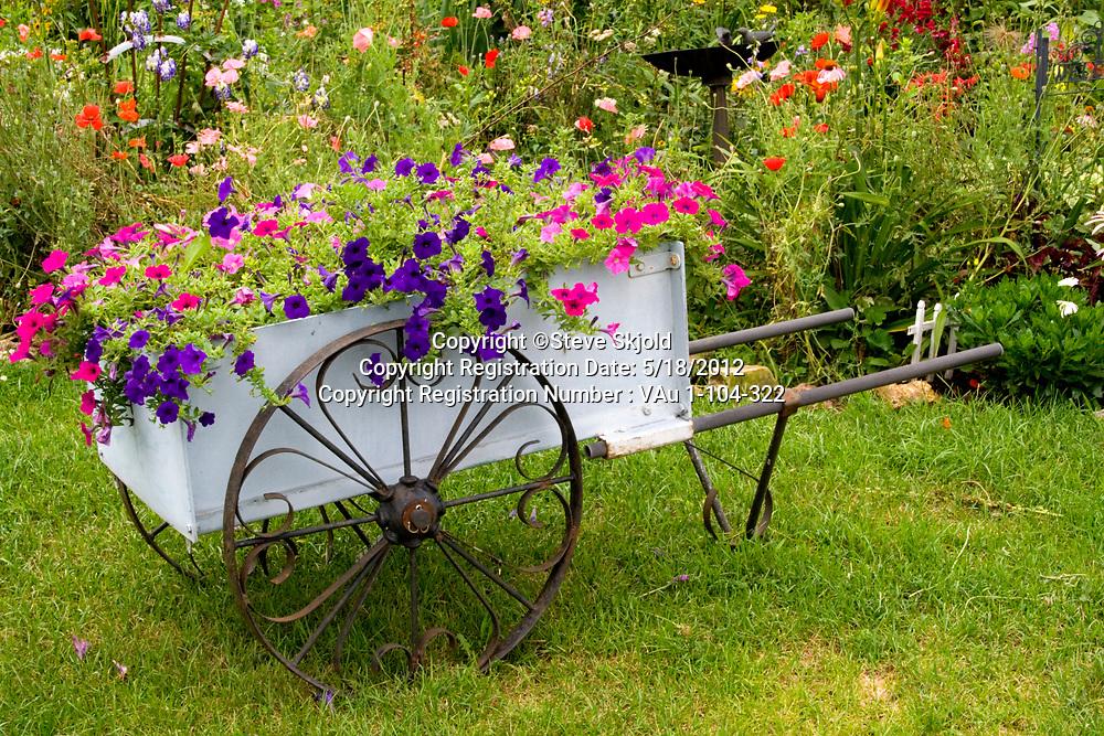Flower garden antique wheelbarrow filled with blue and violet petunias. Lanesboro Minnesota MN USA