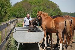 Fokkerij Geens Karel<br /> Stal De Kalvarie - Westerlo 2010<br /> © Dirk Caremans