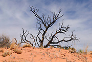 The bare branches of a dead bush in the Arizona desert. Missoula Photographer