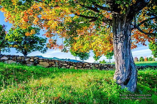 Fall in NH.<br />