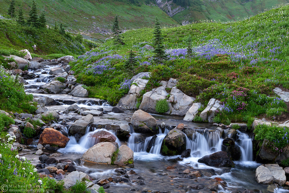 Wildflowers surround a small waterfall on Edith Creek at Paradise in Mount Rainier National Park, Washington State, USA