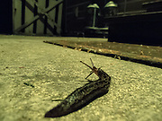 Slug on the patio at night