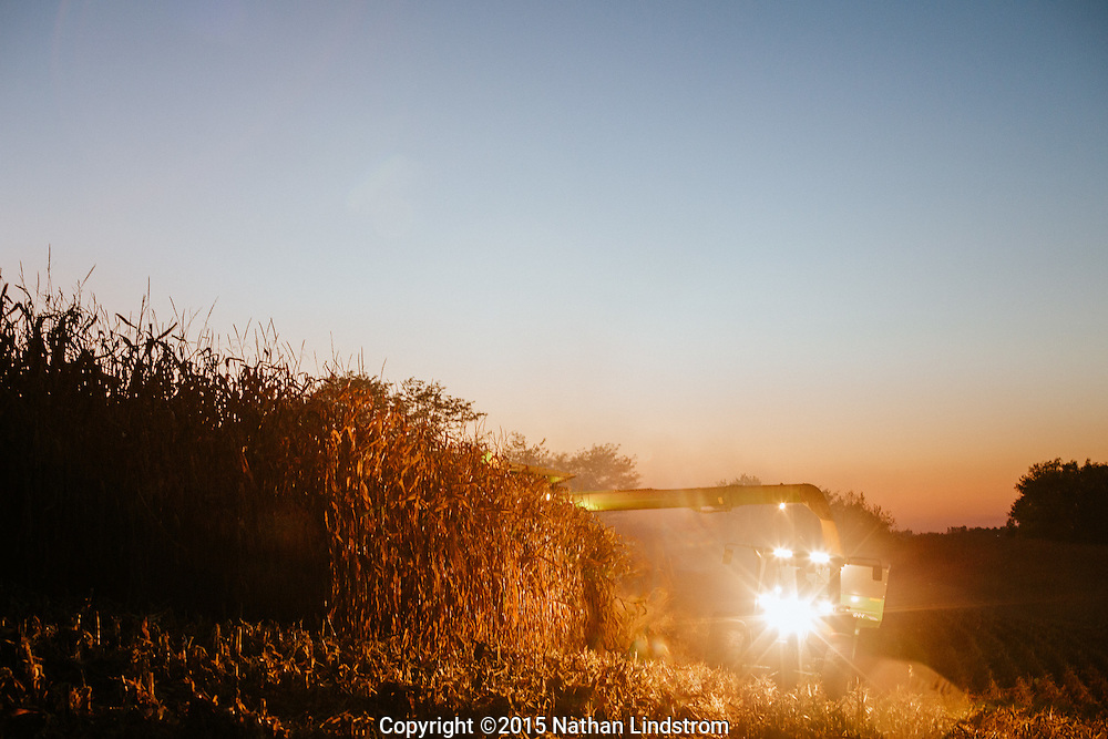 Harvesting fields of corn.<br />