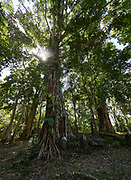 Laos, Champasak Province. Ban Tomo, Oum Muong ruins.