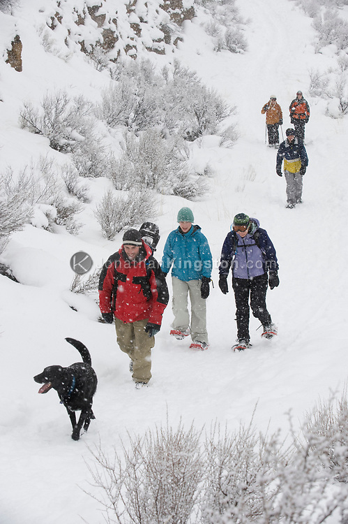 High angle view of a medium sized group of adults and one black dog walking on a trail in the snow in Bend, Oregon. (releasecode: jk_mr1034, jk_mr1035, jk_mr1036, jk_mr1032, jk_mr1033, jk_mr1031) (Model Released)