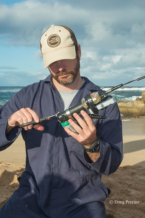 NOAA researcher Dr. Charles Littnan prepares a  Crittercam and tracking instrumentation package to put on a Hawaiian monk seal, west end of Molokai, Hawaii, photo taken under NOAA permit 10137-6, Ho ike a Maka Project