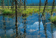 Wapta Marsh. Yoho National Park<br /> Yoho National Park<br /> British Columbia<br /> Canada