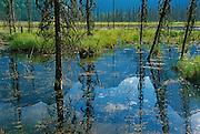 Wapta Marsh. Yoho National Park<br /> Yoho National Park<br /> British Columbia<br /> Canada