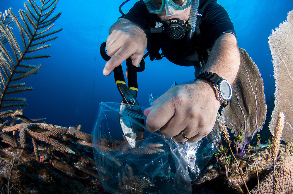 Dive center owner George Gross, working with the Bahamas National Trust, clips a tiny sample of staghorn coral for study. The sample will be used to test which strains will stand up best to the effects of climate change. Those strains will then be used for coral restoration programs throughout the Bahamas.
