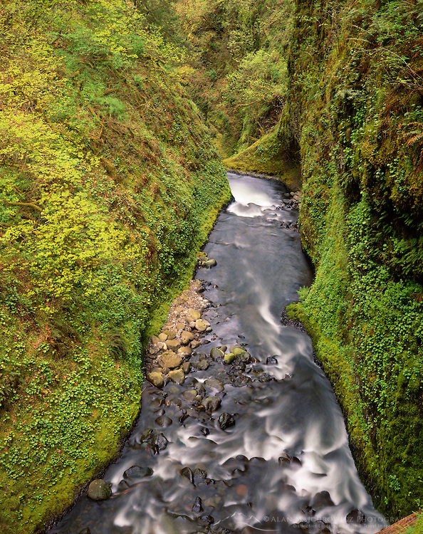 Oneonta Gorge, Columbia River Gorge National Scenic Area Oregon USA