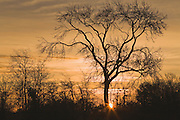 Winter tree at sunrise