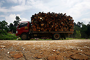 illegal lodging is one of the problem that can destroyed the forest, a lot of lodgers not use main road for their transportation. it's more safe because they not meet with the authority.