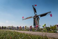 Peloton with rider of Tinkoff (RUS) on the Molendijk at Batenburg, stage 2 from Arnhem to Nijmegen running 190 km of the 99th Giro d'Italia (UCI WorldTour), The Netherlands, 7 May 2016. Photo by Pim Nijland / PelotonPhotos.com | All photos usage must carry mandatory copyright credit (Peloton Photos | Pim Nijland)