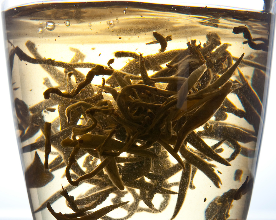Jasmine Pearls green tea unfurling and brewing in a tea glass.