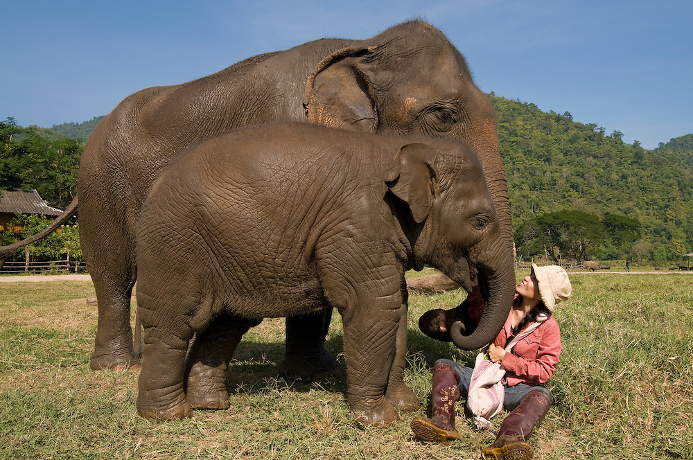 "Sangduen ""Lek"" Chailert feeding baby boy Chang Yim (Smiling Elephant) at the Elephant Nature Park near Chiang Mai, Thailand.  Sangduen ""Lek"" Chailert founded the park as a sanctuary and rescue centre for elephants.  The park currently has 32 elephants sponsored and supported by volunteers from all over the world."