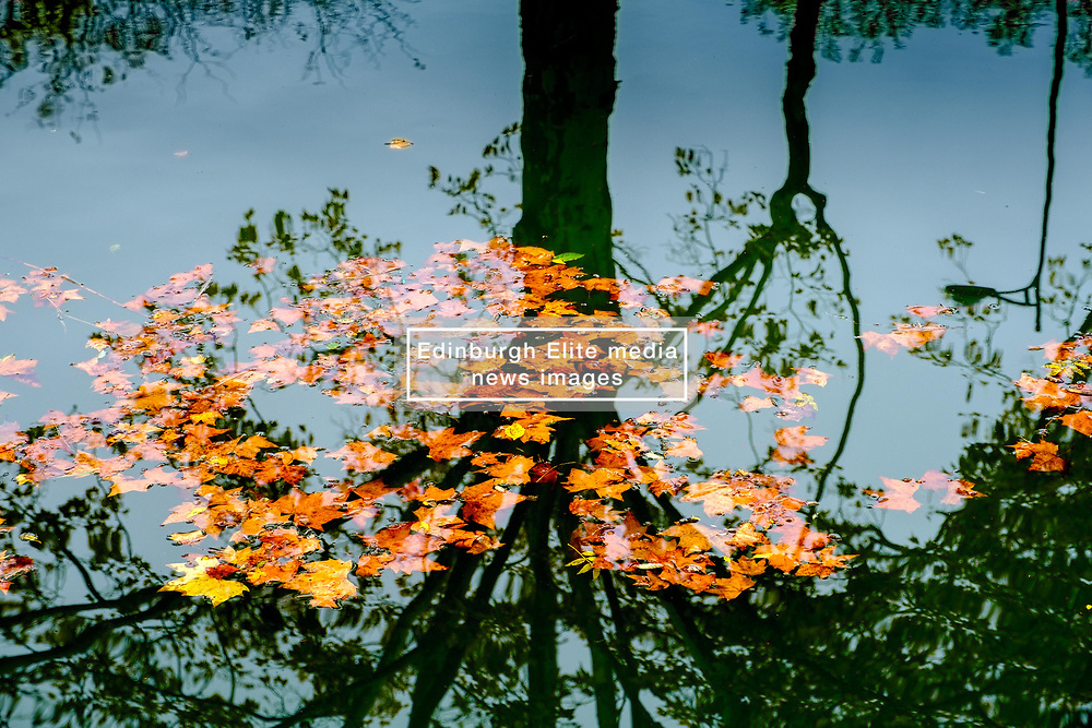 Leaves floating on the Canal du Midi with the reflections of a tree, Toulouse, France<br /> <br /> (c) Andrew Wilson   Edinburgh Elite media