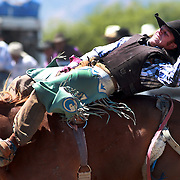 Joe Fentiman from Waitati in action during the Open Bare Back competition at the Wanaka Rodeo. Wanaka, South Island, New Zealand. 2nd January 2012