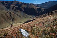 Mountain biker riding the slopes of the Tarcu Mountains Natura 2000 site. Southern Carpathians, Munții Ṭarcu, Caraș-Severin, Romania.