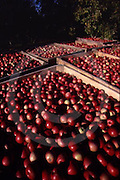 Adams Co. Pa Produce, Apple Orchard, Pennsylvania