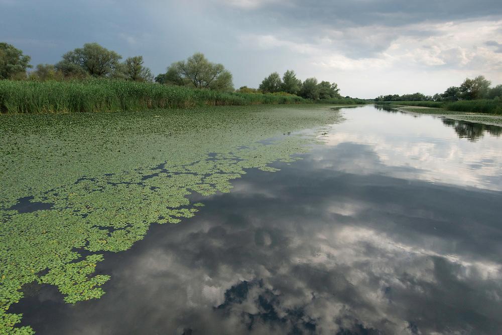 A water chestnut (Trapa natans) carpet along a tributary to Old Danube, Danube Delta, Romania.