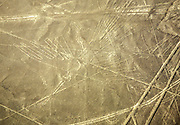 Aerial view of the Condor. The Nazca Lines are a group of very large geoglyphs formed by depressions or shallow incisions made in the soil of the Nazca Desert in southern Peru. They were created between 500 BC and 500 AD.