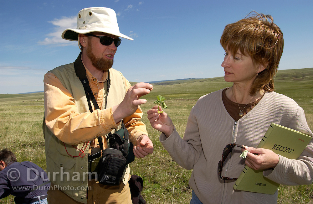 Preserve ecologist for The Nature Conservancy, Rob Taylor, consults with Catherine Parks from the US Forest Service during a weed survey on Zumwalt Prairie Preserve. Keeping out foreign weeds, and allowing native vegetation to flourish is a Conservancy priority on the rare grassland. (Fully released0