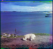What Russian Empire Looked Like Before 1917… In Colour<br /> <br /> <br /> The Sergei Mikhailovich Prokudin-Gorskii Collection features colour photographic surveys of the vast Russian Empire made between ca. 1905 and 1915. Frequent subjects among the 2,607 distinct images include people, religious architecture, historic sites, industry and agriculture, public works construction, scenes along water and railway transportation routes, and views of villages and cities. An active photographer and scientist, Prokudin-Gorskii (1863-1944) undertook most of his ambitious colour documentary project from 1909 to 1915. <br /> <br /> Photo Shows; Studies on Lindozero. The breed of dog is a Laika. (1915)<br /> ©Library of Congress/Prokudin-Gorskii/Exclusivepix Media