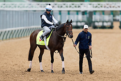 Derby 142 hopeful My Man Sam with <br /> Daniel Bernardini up were on the track for training, Tuesday, May 03, 2016 at Churchill Downs in Louisville.