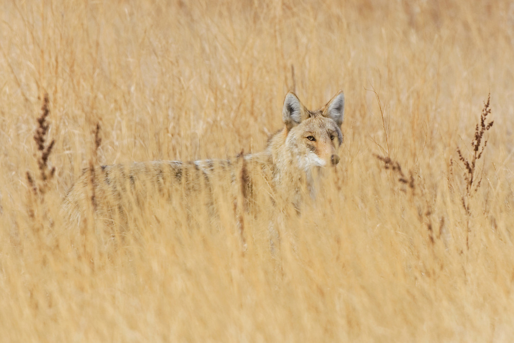 Image captured in Wheat Ridge, Colorado.