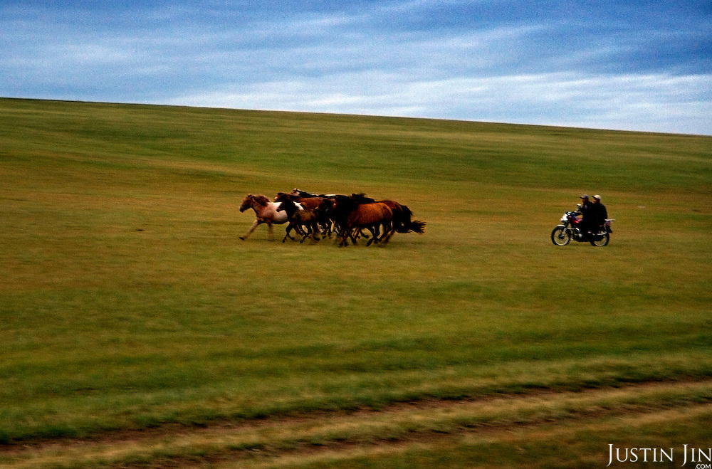 Mongolian horsemen herd their horses on the grassland.