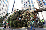 Workers raise the 94-foot Norway Spruce, from Oneonta, NY, that will become the Rockefeller Center Christmas Tree, Saturday, Nov. 12, 2016, at Rockefeller Plaza in New York. The 84th Rockefeller Center Christmas Tree Lighting ceremony will take place on Wednesday, Nov. 30. (Photo by Diane Bondareff/AP Images for Tishman Speyer)