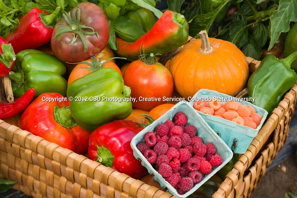 A basket of organic produce grown at the Colorado State University Horticulture Research Center
