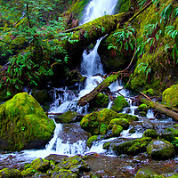 Quinault Rain Forest, ONP  South Shore and North Shore Roads around Lake Quinault, Wa  Merriman Falls, Edited and printed 4/18/18