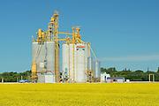 Hightroughput grain elevator and canola crop<br /> Starbuck<br /> Manitoba<br /> Canada